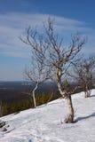 Lapland natur Arkivbilder