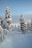 lapland snow Arkivfoton