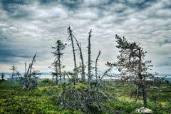 Lapland vildmark Fotografering för Bildbyråer