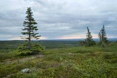 Lapland vildmark Royaltyfri Bild