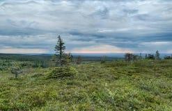Lapland vildmark Royaltyfria Foton