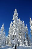 Lapland Winter. Beautiful winter day in Lapland,  Finland Royalty Free Stock Photo