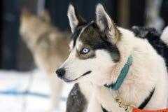 Lapland winter wonderland Royalty Free Stock Photo