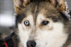 Lapland winter wonderland Stock Photo