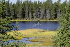 laponia国家公园 库存照片