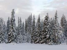 Laponia Fotos de archivo libres de regalías