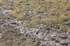Lapp av lerigt gräs Fotografering för Bildbyråer