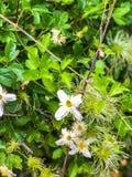 Lapp av vita blommor och gröna sidor fotografering för bildbyråer