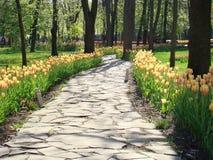Lappad bana med tulpan på sidorna Utsikten av en stenlagd bana med blommor och träd Royaltyfri Foto