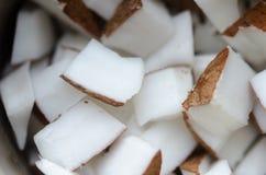 Lappar av kokosnöt fotografering för bildbyråer