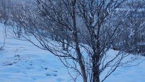 Lappland美好的冬天风景在芬兰 股票录像