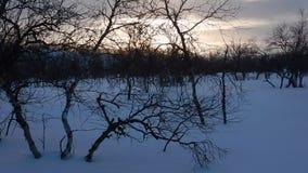 lappland美好的冬天风景在finnland的 影视素材