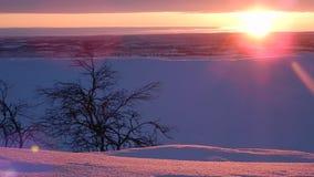 lappland美好的冬天风景在finnland的 股票视频