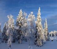 Lappland stockfotos