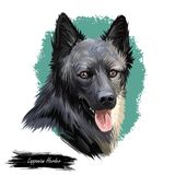 Lapponian herder dog canine closeup of pet digital art illustration. Lapinporokoira hound with stuck out tongue, lapsk. Vallhund originated in Finland. Portrait stock illustration