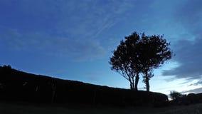 Laps de temps d'un arbre pendant le coucher du soleil et une nuit étoilée complète banque de vidéos