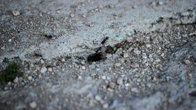 Laps de temps de jour de fourmis clips vidéos