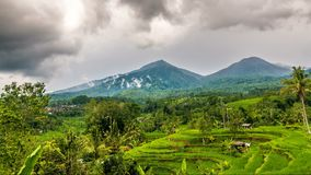 Laps de temps de terrasse de riz et de deux montagnes banque de vidéos