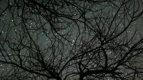 Laps de temps des étoiles passant par des arbres banque de vidéos