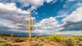 Laps de temps des nuages passant au-dessus du grand cactus dans le désert banque de vidéos