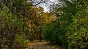 Laps de temps - forêt d'automne banque de vidéos