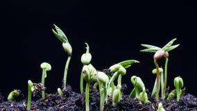 Laps de temps de graine de germination banque de vidéos