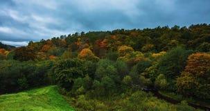 Lapso de tempo da folha do outono com cloudscape em Lituânia, Europa video estoque