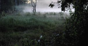 Lapso de tempo da névoa na floresta filme