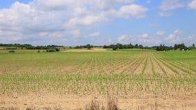 Lapso de tempo do campo cultivado na mola, França video estoque