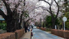 Lapso de tempo do festival da flor de cerejeira em Aoyama Cemetery Aoyama Cemetery ? um ponto popular durante a esta??o de mola,  filme