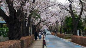 Lapso de tempo do festival da flor de cerejeira em Aoyama Cemetery Aoyama Cemetery ? um ponto popular durante a esta??o de mola,  vídeos de arquivo