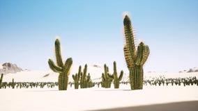 Lapso de tempo do nascer do sol grande sobre o deserto com a silhueta do cacto solit?rio no primeiro plano ilustração royalty free