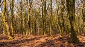 Lapso de tempo do sol em uma floresta video estoque