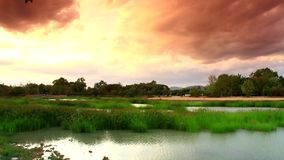 Lapso de tempo a lagoa com grama e o céu amarelo filme