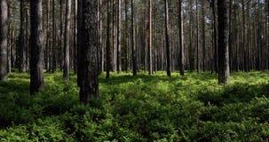 Lapso de tempo na floresta vídeos de arquivo