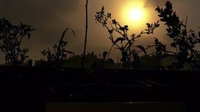 Lapso de tiempo épico de las nubes en un balcón adornado con las flores durante salida del sol con la luz del sol hermosa almacen de metraje de vídeo
