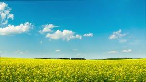 Lapso de tiempo amarillo del campo de la colza metrajes