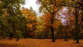 Lapso de tiempo - bosque del otoño almacen de metraje de vídeo