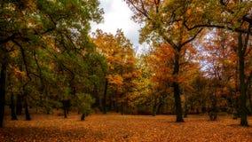 Lapso de tiempo - bosque del otoño almacen de video