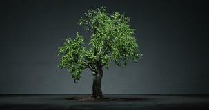 Lapso de tiempo cada vez mayor del árbol de los bonsais stock de ilustración