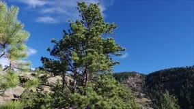 Lapso de tiempo colorido de HDR de los árboles de pino de montañas de la mañana metrajes
