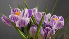 Lapso de tiempo de la flor almacen de video