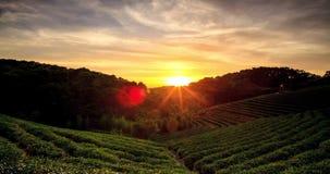 Lapso de tiempo de la puesta del sol del jardín de té con el fondo agradable almacen de video
