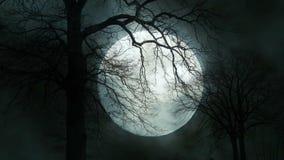 Lapso de tiempo de la silueta fantasmagórica del árbol del claro de luna Noche mística de la luna almacen de metraje de vídeo