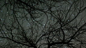 Lapso de tiempo de las estrellas que pasan a través de árboles metrajes