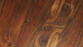 Lapso de tiempo de las hormigas que marcha metrajes