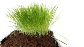 Lapso de tiempo de muerte de la planta 4k de la hierba verde almacen de video