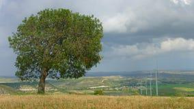Lapso de tiempo del campo hermoso, árbol verde cerca del parque eólico, nubes, cambio del tiempo metrajes