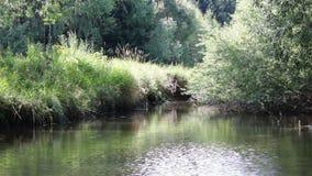 Lapso de tiempo en el pequeño río, paisaje checo almacen de metraje de vídeo