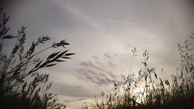 Lapso de tiempo espectacular en el prado de la primavera con el cielo cubierto almacen de metraje de vídeo
